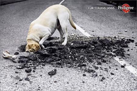 perros_fuertes