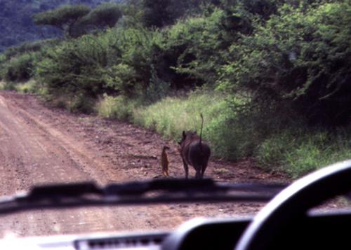 Timón y Pumba reales