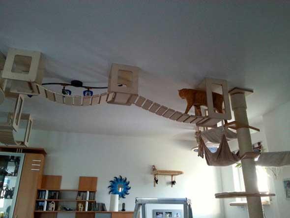 Juguetes y muebles modulares para gatos para paredes y techos, marca Goldtatze