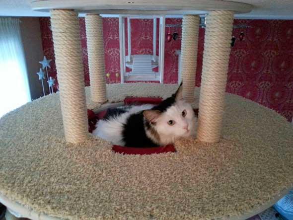 juguetes-y-muebles-modulares-para-gatos-para-paredes-y-techos-7