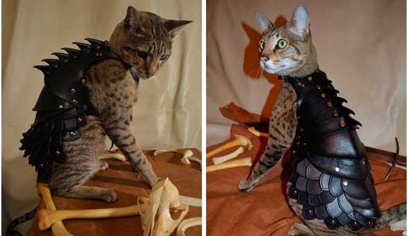 Armadura de batalla para gatos