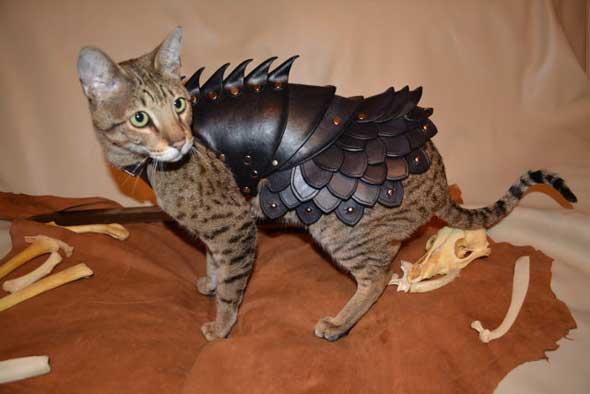 Armadura de combate para gatos