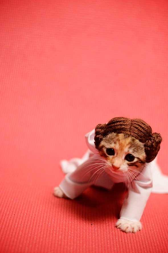 gata-princesa-leia