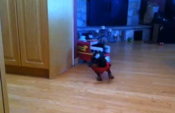 Humor - Perros salchicha bomberos