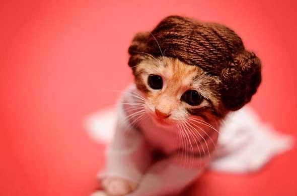 Gatita Princesa Leia