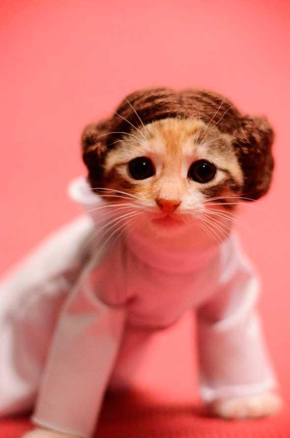 Princesa Leia gato