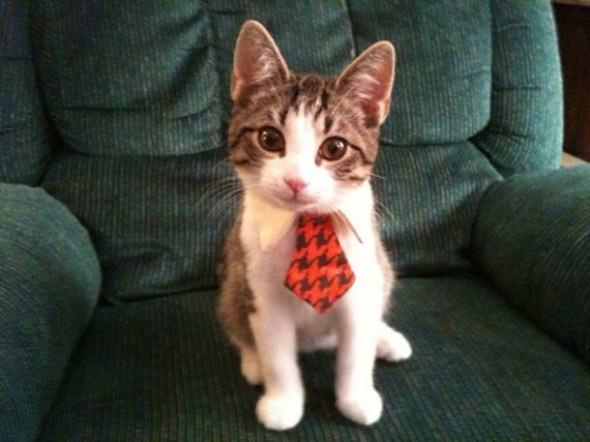 Corbatas y pajaritas para gatos y perros