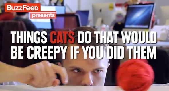 Cosas de gatos que serían raras si tú las hicieses...