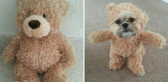 Disfraz de oso Teddy para perro